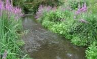 Aménagement des cours d'eau